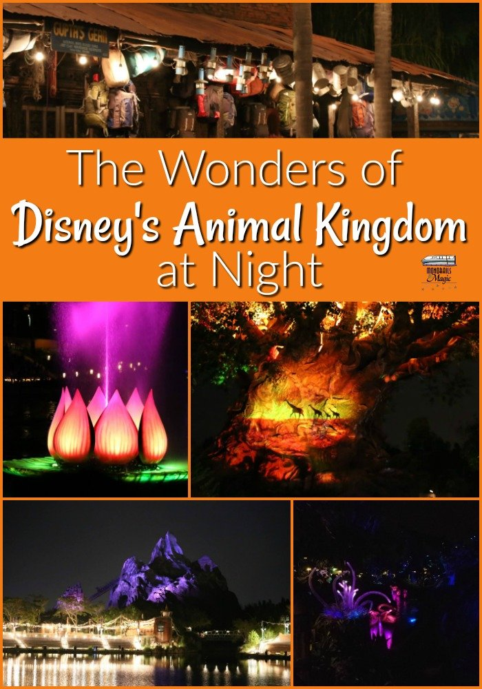 Disney's Animal Kingdom at Night
